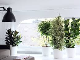 plante pour cuisine quelle plante pour quelle pièce femme actuelle
