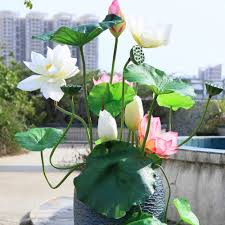100 plant for home decoration formidable garden plant ideas