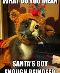 Merry Christmas Cat Meme - funny christmas cats pictures merry christmas happy new year