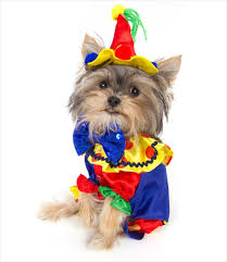 small dog witch costume clown costume u2013 g w little
