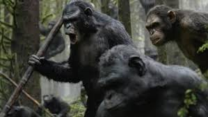 siege social bonobo why apes can t speak like humans cbs