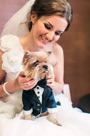 10 adorable pieces of dog wedding attire classy canine clothing