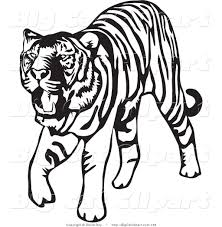 big cat vector clipart of a walking black and white tiger on white