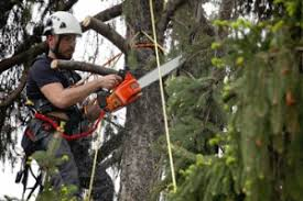 how to find the best roswell tree companies near me tree service