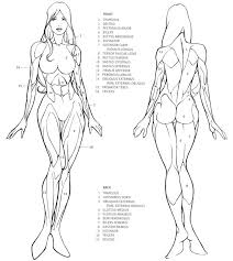 Female Anatomy Video 462 Best Drawing Body Images On Pinterest Draw Drawing