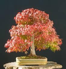 beginner trees grow a bonsai tree
