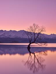 that tree again lake wanaka s lone willow revisited
