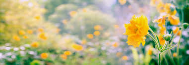 background with yellow flowers stock image image 19524185