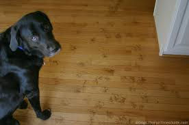 creative of bamboo flooring and dogs is bamboo flooring for
