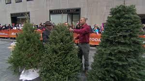 buy christmas tree how to buy and take care of your christmas tree