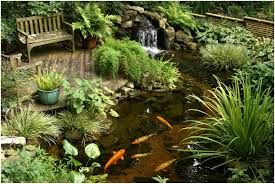 backyards innovative cute water lilies and koi fish in modern