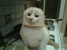 Cat In Bread Meme - cat breading meme infuriating cats everywhere photos huffpost