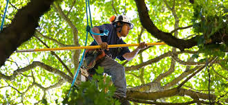 knoxville tree trimming fred s tree service
