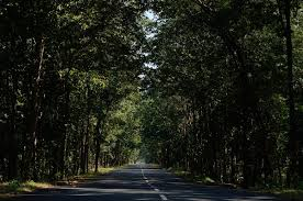 social forestry in india wikipedia