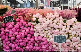 peonies for sale photography sundays in pink peonies parisian
