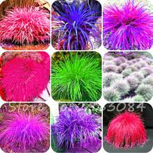 popular ornamental grasses buy cheap ornamental grasses lots from