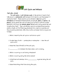 cell cycle and mitosis 6th 12th grade worksheet lesson planet