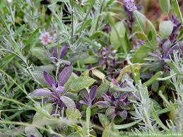how to grow ornamental herbs 7 steps with pictures wikihow