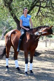 Horse Riding Meme - create meme horse horse horse horse riding pictures
