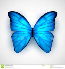 blue butterfly stock vector illustration of butterfly 35991188