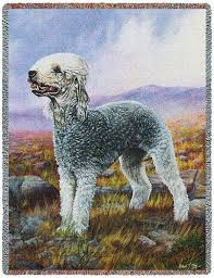 grooming a bedlington terrier puppy how to groom a bedlington terrier u2013 how to clip a bedlington