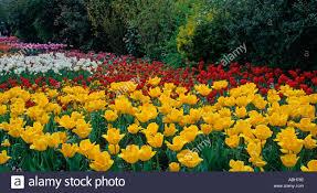 spring flowers st james park london uk stock photo royalty free