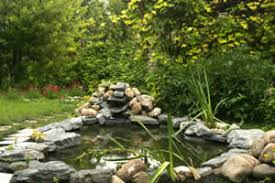 Backyard Ponds For Dummies How To Maintain And Care For Backyard Ponds And Water Gardens
