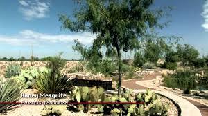 Botanical Gardens El Paso Cactus Succulent Garden El Paso Botanical Garden
