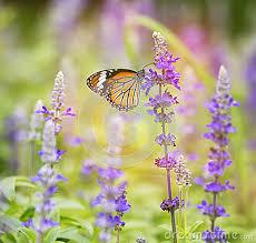 impressive butterfly flower garden flowers for a butterfly garden