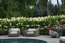 limelight hydrangeas landscaping ideas posted on august 16 2013