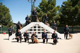 meet the class of 2014 chp police dog graduates cbs san francisco