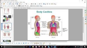 Abdominal Anatomy Quiz Anatomy And Physiology Test Quiz 1 Study Session Youtube