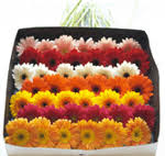 bulk flowers the grand rapids area best bulk and wholesale flowers best