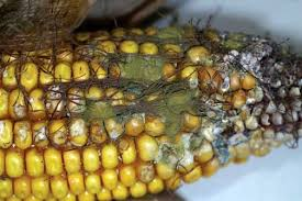 Methods Of Controlling Plant Diseases - applied mythology five ways farmers control pests other than with