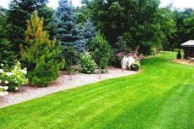 Privacy Ideas For Backyard Fabulous Tree Landscaping Ideas For Backyard With Trees Newsonair