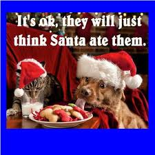 Merry Christmas Cat Meme - funny christmas memes clean christmas pinterest funny