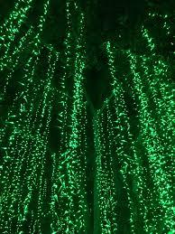 oh snap illuminating night with la zoo lights