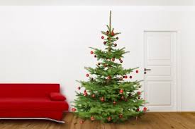 christmas tree no lights caring for your christmas tree proven winners