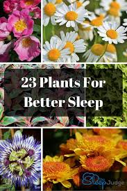 Plant For Bedroom 23 Plants For Your Bedroom That Will Help You Sleep