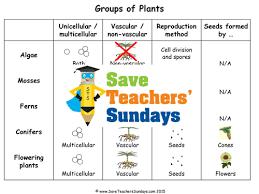 save teachers u0027 sundays teaching resources tes