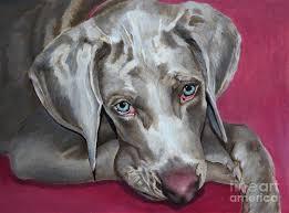 scooby weimaraner pet portrait painting by enzie shahmiri