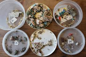 lake champlain has 7 billion pieces of marine debris along its