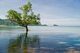 tree in water koh chang thailand stastny flickr