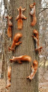 best 25 squirrel ideas on pinterest squirrels cute squirrel