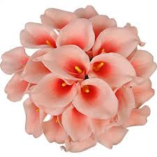 coral color coral color flowers amazon com