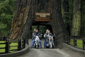 Chandelier Tree California California Redwoods Northern California S Chandelier Drive Thru