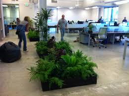 cool 90 great office plants inspiration of 41 best office plants