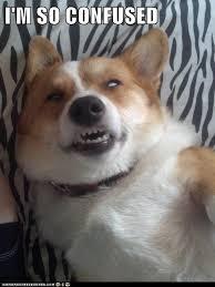 Confused Dog Meme - corgis google search corgi pinterest corgis corgi and gifs