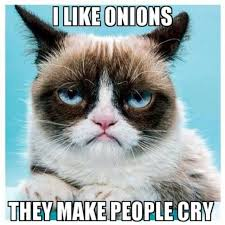 Best Grumpy Cat Memes - top 40 funny grumpy cat pictures and quotes quotes and humor