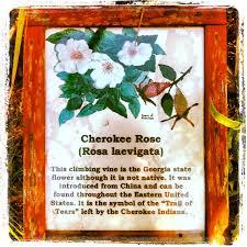 thanksgiving day of mourning native american blessings cherokee cherokee indian prayer of